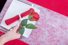Woman hand with red rose Stock Photography