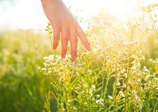 Woman hand running through meadow field stock photos