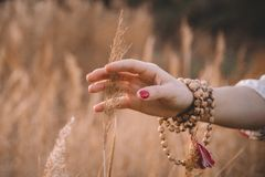 Woman hand running through wheat field. Girl`s hand touching yellow wheat ears closeup. Harvest concept. Harvesting stock photo