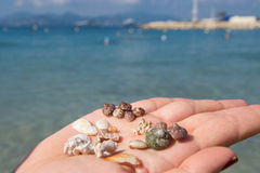 Woman hand and sea shels Royalty Free Stock Photo