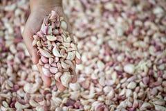 Woman hand selecting fresh garlic Royalty Free Stock Photo