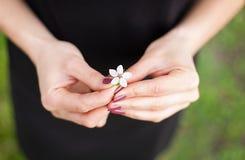 Woman hand with a spring blossom. Sakura flower Stock Photos