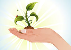 Woman Hand with the Sprout Stock Image