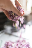 Woman hand stirring lilac flowers Stock Photography