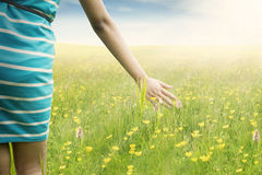 Woman hand touching blossom flowers Stock Photography