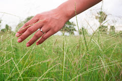Woman hand touching the grass in the pasture. Woman hand touching the grass in the pasture and ring in her hand Royalty Free Stock Images