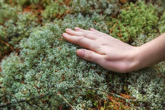 Woman hand touching moss Stock Photos