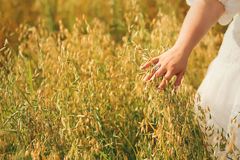 Woman hand touching tall summer grass Stock Images