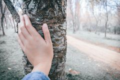 Woman hand touching tree trunk Stock Photos