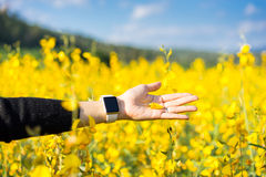 Woman hand touching yellow flowers royalty free stock images