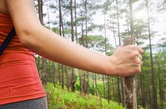 A woman hand with walking sticks on a forest background. Stock Photography
