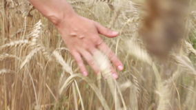 Woman hand on wheat field, rear view stock video footage
