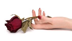 Woman Hand With Rose Royalty Free Stock Photos