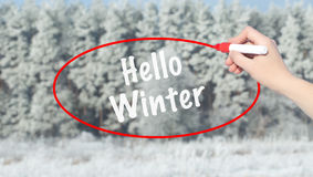 Woman Hand Writing Hello Winter with marker over snowy forest. Royalty Free Stock Photo