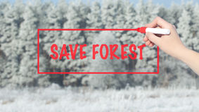 Woman Hand Writing Save Forest with marker over snowu trees. Stock Image