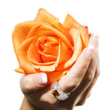 Woman hand with yellow rose Royalty Free Stock Image