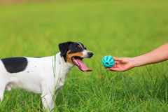 Woman handing a toy to a dog Stock Photo
