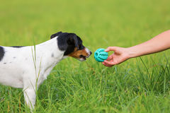 Woman handing a toy to a dog Royalty Free Stock Images