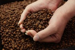 Woman hands and coffee beans Royalty Free Stock Images
