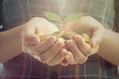 Woman hands cover growing plant money coin Royalty Free Stock Image
