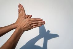 Woman hands creating silhouette shadow of animal on white wall b. Ackground. Hand shadow of bird or butterfly Stock Images