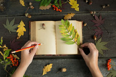 Woman hands drawing or writing with pencil in vintage open notebook over wooden background. Autumn still life. Autumn leaves stock photo