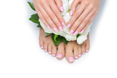 Woman hands and feet with french manicure. Beautiful woman hands and feet with french manicure resting near peony flowers. Isolated over white background. Copy royalty free stock photography
