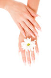 Woman hands with flowers Royalty Free Stock Photos