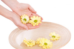 Woman hands and flowers Royalty Free Stock Images