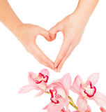 Woman hands and flowers of orchid Royalty Free Stock Photography