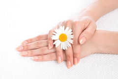Woman hands french manicure with camomile flower on fresh towel Stock Photo