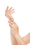 Woman hands french manicure with chamomile flower Stock Image
