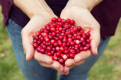 Woman hands full of berries royalty free stock photography
