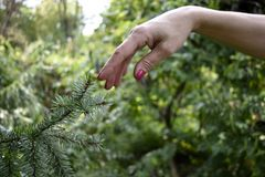 Woman finger touching tree branch stock image