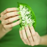 Woman hands with green nail polish holding some tropical leaves. Sensual studio shot can be used as background Royalty Free Stock Photography