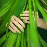 Woman hands with green nail polish holding some tropical leaves. Sensual studio shot can be used as background Royalty Free Stock Image