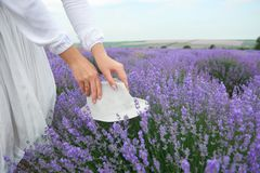 Woman hands with a hat is on the lavender flower bush, beautiful summer landscape with lavender flowers in the field royalty free stock photography