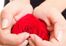 Woman hands heart with rose petals. Woman hands heart with red rose petals Stock Photos