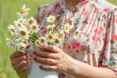 Woman hands hold bouquet of fresh wild daisies in vase Stock Images
