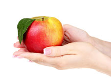 Woman hands holdig ripe organic apple Stock Image