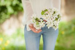 Woman hands holding apple blossom in her hands Royalty Free Stock Photos