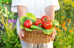 Woman  hands holding a basket full of vegetables in the garden Stock Photos