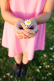 Woman hands holding a beautiful daisy Stock Photo