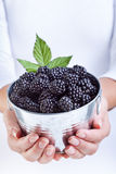 Woman hands holding blackberries in a small bucket Stock Photo