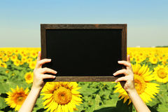 Woman hands holding blank frame Royalty Free Stock Photography