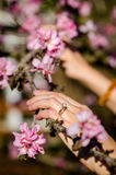 Woman hands holding the branch of  tree in blossom Stock Image