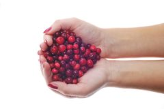 Woman hands holding cranberrys Royalty Free Stock Images