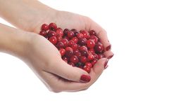 Woman hands holding cranberrys Stock Photography