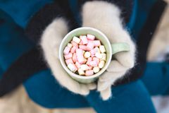 Woman Hands Holding Cup of Hot Chocolate with Marshmallow candies. Knitted mittens and Warm cocoa drink royalty free stock image