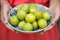 Woman hands holding a dish of green figs. Woman hands with red dress holding a porcelain dish full of green ripe figs Royalty Free Stock Photo